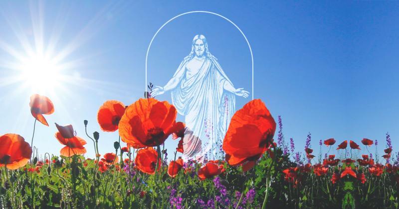 Image of The Church's new symbol. Photo of poppy field by corina ardeleanu via Unsplash.