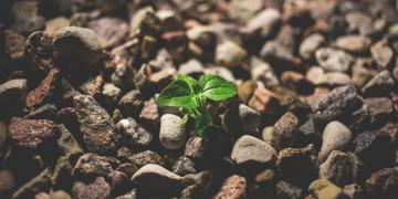 Parable of the Sower. Image of seedling by Pexels via Pixabay.
